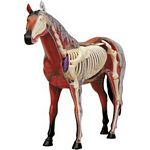X-Ray Horse Anatomy Model - Revell models  (Revell 02099)