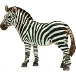 Zebra, Female - Schleich World of Nature - Wild Life  (Schleich 14392)