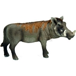Warthog Boar - Schleich World of Nature - Wild Life  (Schleich 14611)